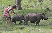 ASSAM (INDIA), April 13, 2016 <br /> <br /> Kate Middleton, wife of British Prince William, plays with a baby rhino at the Centre for Wildlife Rehabilitation at Panbari reserve forest in Kaziranga, Indian northeastern state of Assam, on  April 13, 2016. British Prince William and his wife Kate Middleton on Wednesday got a taste of India's wildlife by visiting the Kaziranga National Park in the northeastern state of Assam, home to two-thirds of the world's Indian one-horned rhinos. <br /> ©Exclusivepix Media