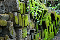 """""""Mossy Bricks"""" - This old stack of mossy bricks were photographed in Puerto Vallarta, Mexico."""