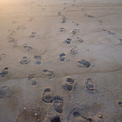 Sun rise foot prints in the sand on Cape Hatteras in North Carolina in July 2005. Christina Paolucci, photographer)