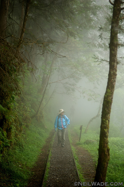 A lone hiker walks through a cloud forest on Tai Ping Shan, a popular mountain for trekking in northern Taiwan.