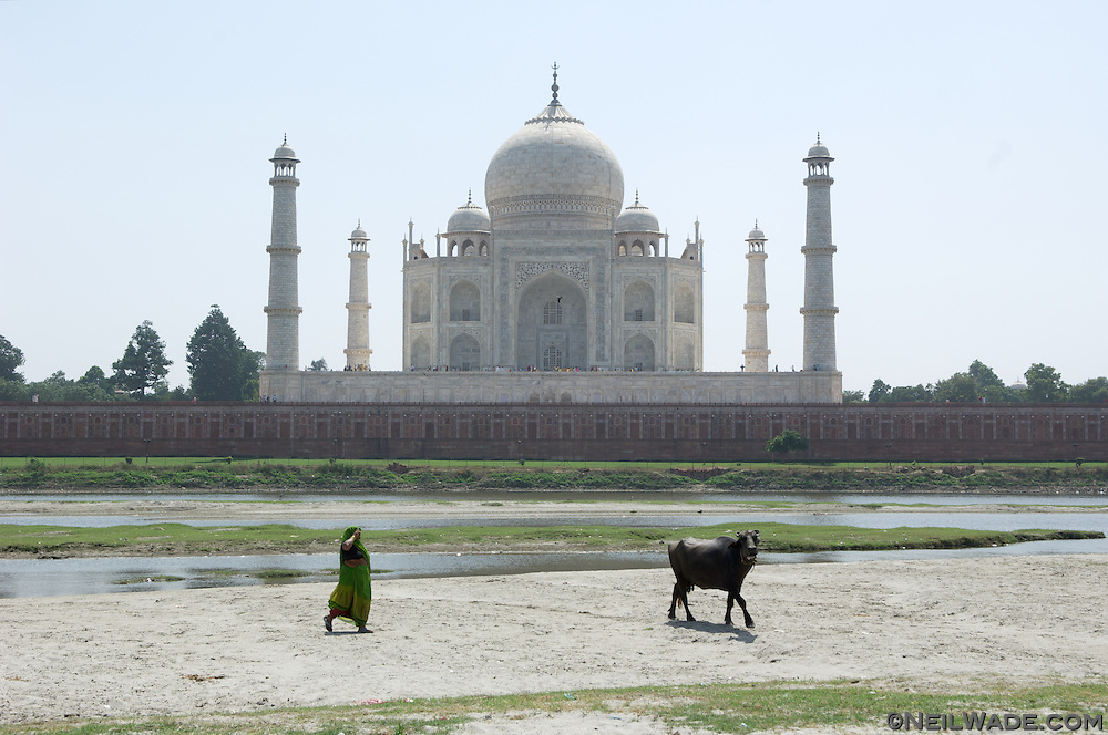 A bull stands its ground on the quiet river bank behind The Taj Mahal.  Agra, India.