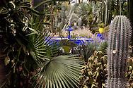 Morocco, marrakech , Majorelle garden  Marrakech /  jardin du peintre Majorelle  ///   Marrakech - Maroc