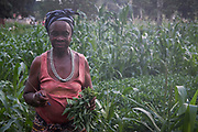An elderly woman tends to crops in Makeni, Bombali district, Sierra Leone on March 30, 2017.