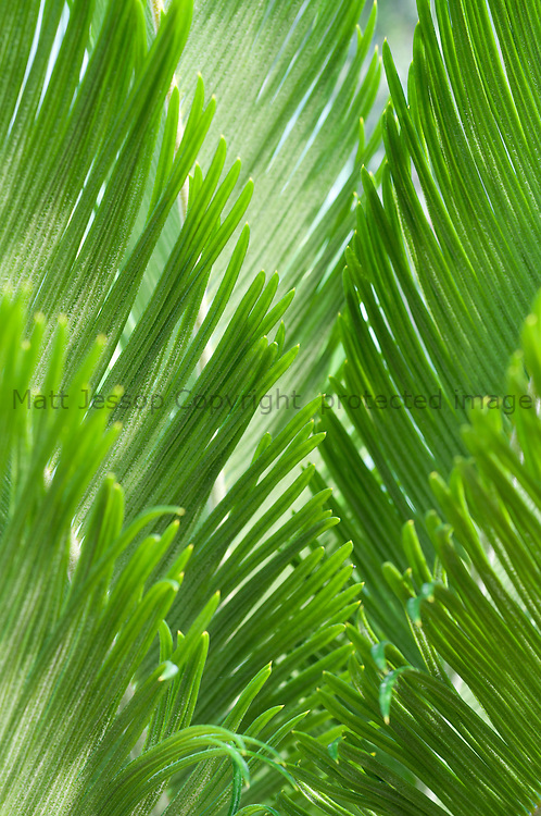 Green Fronds