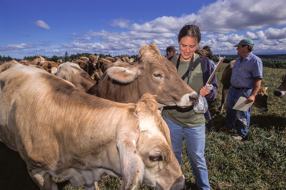 Group of farmers out in field with Brown Swiss dairy cows.