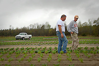 Extension agents looks over research crops planted in Kinston. PHOTO BY ROGER WINSTEAD