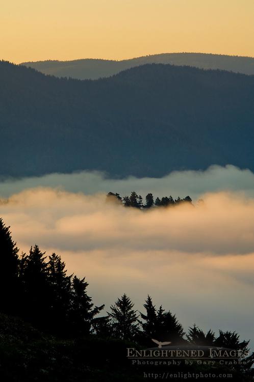 Sunrise light and coastal fog in the Klamath River valley, Del Norte County, California