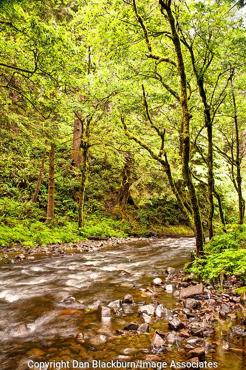 Rock Creek Flows Through the Siuslaw National Forest Near the Orgon Coast