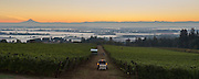 Sunrise over Brooks estate vineyard with Mt. Hood in the background, Eola-Amity AVA, Willamette Valley, Oregon.