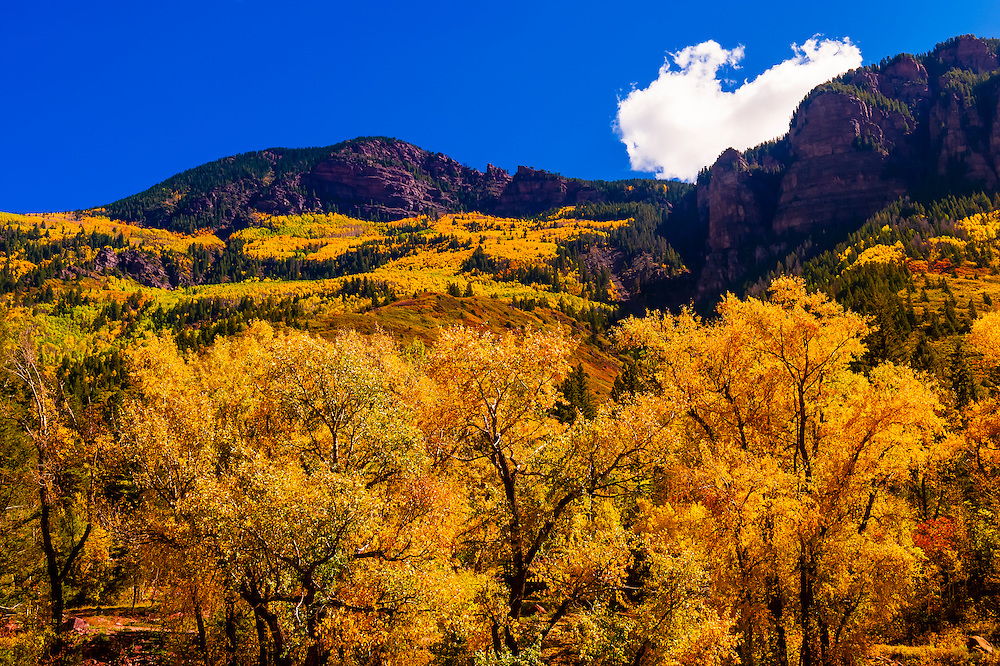 Fall foliage, Rocky Mountains, Redstone, Colorado USA.
