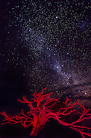 High in the mountains of Southern Australia, I painted this dead standing tree with a red headlamp on an ultra clear night. Capturing the Milky Way on this evening was magnificent.