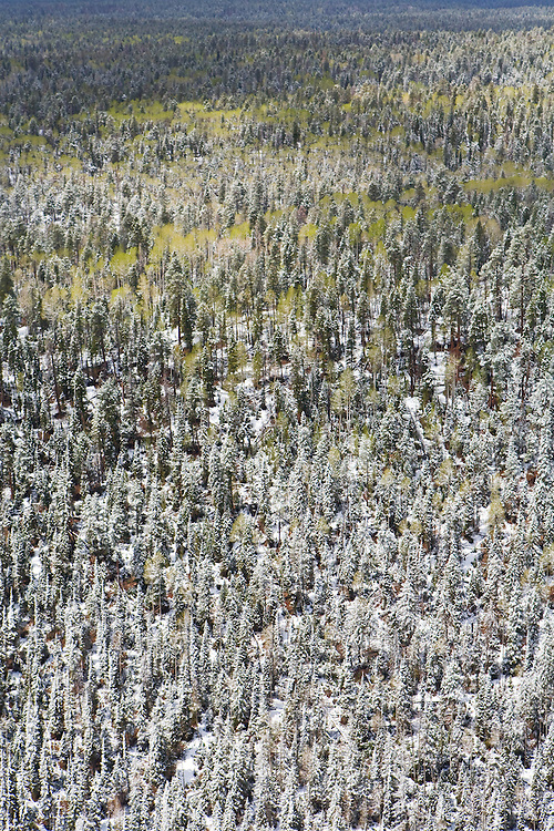 An aerial view of the snow covered forest on the North Rim of Grand Canyon National Park.
