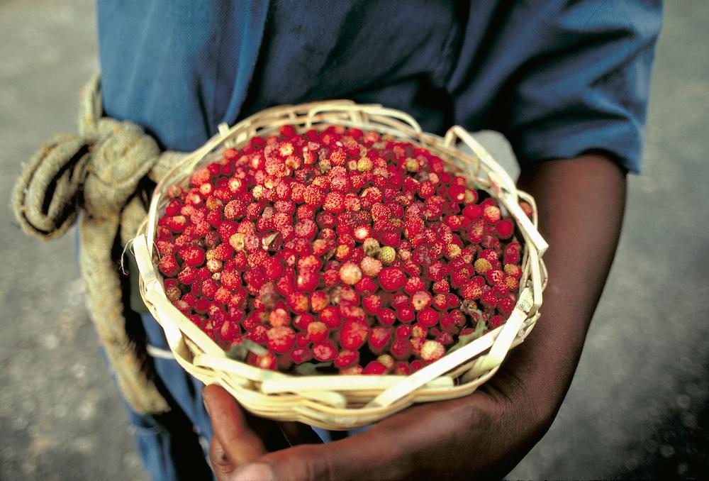 Woman selling berries, Port O Prince, Haiti