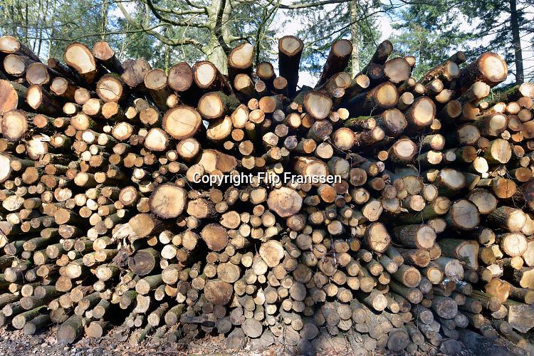 Nederland, Groesbeek, 24-2-2016Een stapel gekapte boomstammen liggen klaar voor transport. Staatsbosbeheer is bezig met het uitdunnen van dit bos.Foto: Flip Franssen/H H