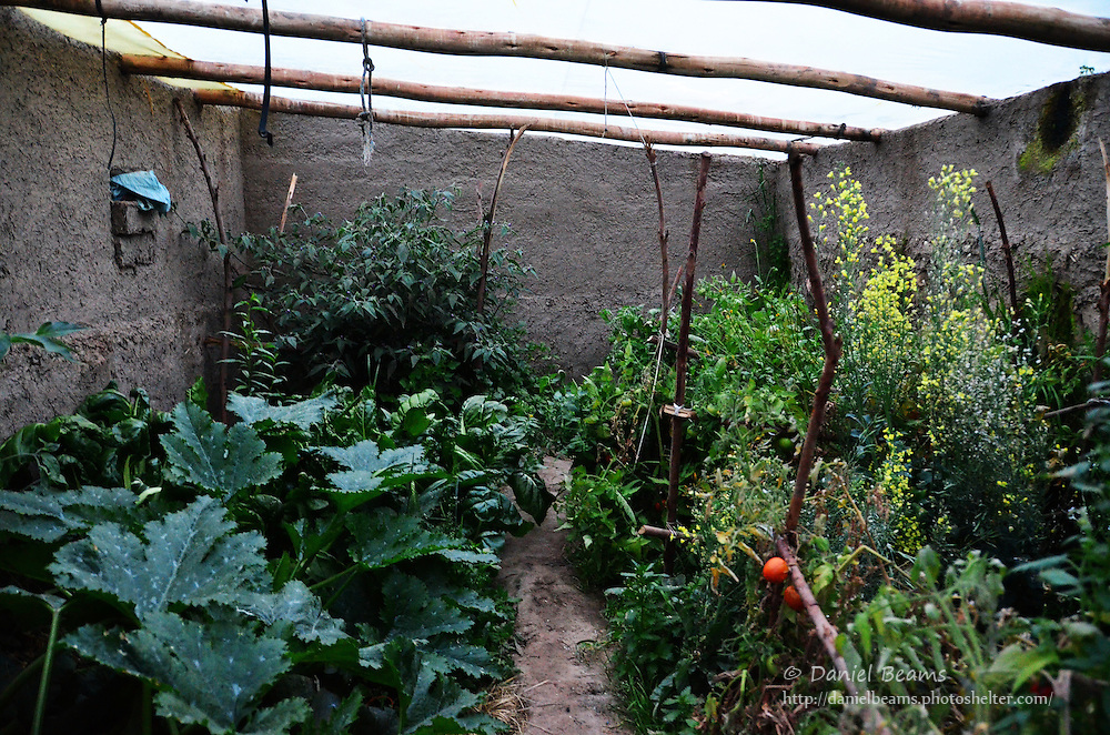 Garden green house full of vegetables high  in the Andes mountains of Cochabamba, Bolivia