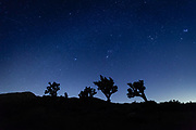 Joshua Tree National park has very little light pollution and an incredibly starry night sky