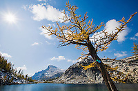 A Larch tree in Autumn next to Perfection lake with Little Annapurna in the distance, Enchantment Lakes Wilderness Area, Washington Cascades, USA.