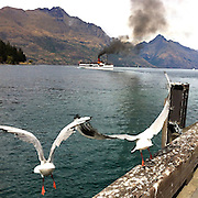 Seagulls take flight near the TSS Earnslaw, the 100 year old vintage coal fired passenger steam ship which sails on Lake Wakatipu, Queenstown, New Zealand. The popular tourist attraction is celebrating it's centenary year with celebrations planned for October 2012.  Queenstown, Central Otago, New Zealand. 29th February 2012. Photo Tim Clayton