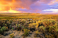 Killpecker Dunes & Big Sagebrush at sunset in spring. Great Divide Basin in the Red Desert, Wyoming