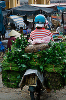 Fresh leafy green vegetables on their way to market on the back of a motorbike.