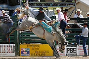 061811-Evergreen, COLORADO-evergreenrodeo-Saddle bronc rider Garet Groshans, of Padroni, CO, hangs on to score during the Evergreen Rodeo Saturday, June 18, 2011 at the El Pinal Rodeo Grounds..Photo By Matthew Jonas/Evergreen Newspapers/Photo Editor