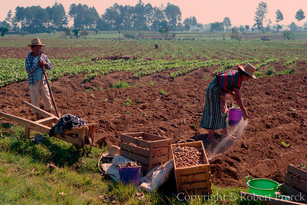 GUATEMALA, HIGHLANDS, AGRICULTURE traditional farming near Lake Atitlan; potatoes and vegetables