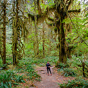 38 - Olympic National Park