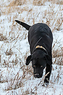 Riley at Lake Audubon on Wednesday, Feb. 14, 2018.