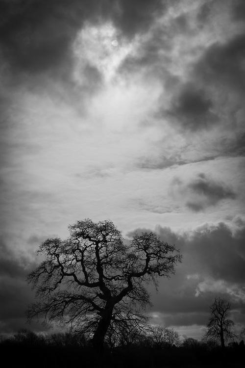 Trees, clouds, Rothley, Leicestershire, England.<br /> Photo: Ed Maynard<br /> 07976 239803<br /> www.edmaynard.com