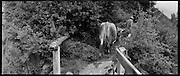 ALPWIRTSCHAFT in der Schweiz. Agriculture de montagne en Suisse. Traditional alpine farming in Switzerland, preserving nature. Désalpe avec une seule vache qui doit aller voir un vétérinaire. Hoferalpje, Saa-Tal. Wallis. © Romano P. Riedo