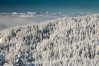 a snow covered coniferous forest with cloud-filled Nisqually River Valley and more mountains beyond in winter. Washington state, USA