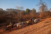 Kyone village, washing buffalo, near Mandalay, Burma