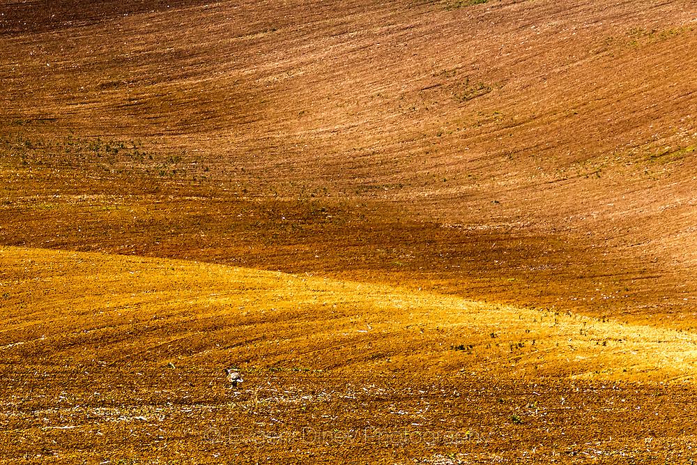 Running rabbit in field