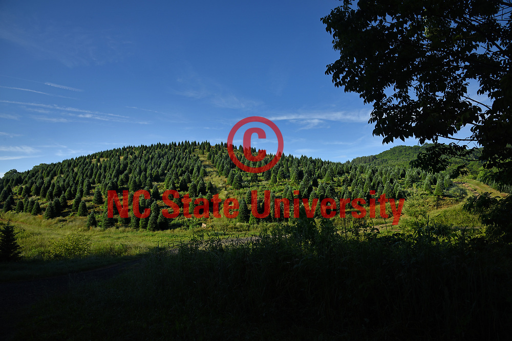 Christmas tree farm in Avery County just outside Newland.