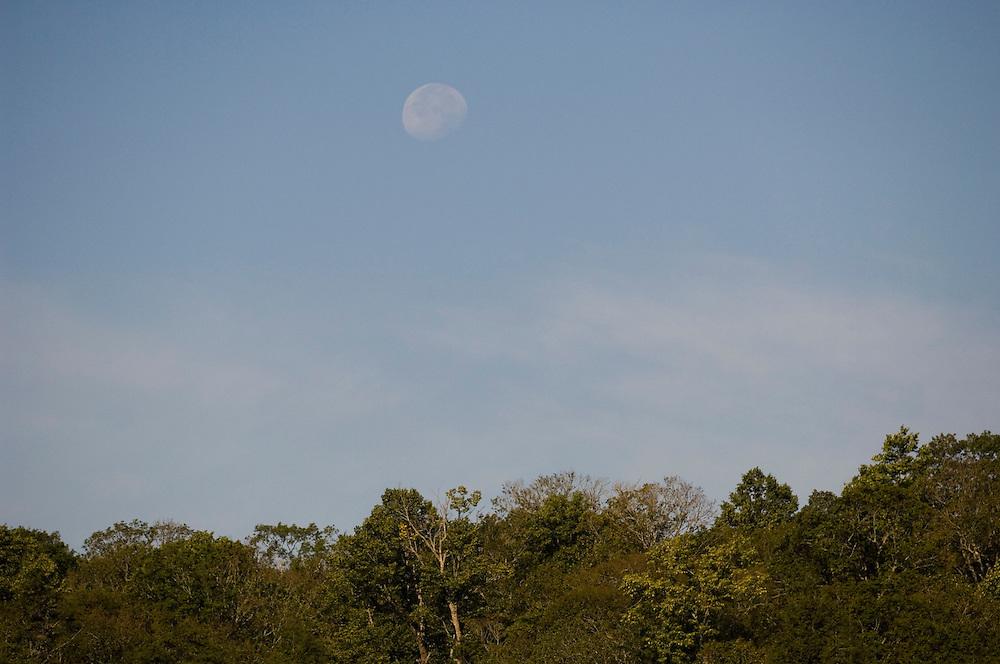 Moonrise at Sylvania Wilderness Area of Ottawa National Forest near Watersmeet Michigan.