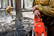 22 JUNE 2010 - FLAGSTAFF, AZ: Members of the Groveland Hot Shots do mop up on the line at the Schultz Fire burning north of Flagstaff, AZ. The fire has consumed more than 12,000 acres of forest land and burned within a few feet of homes in some neighborhoods in Flagstaff.   PHOTO BY JACK KURTZ