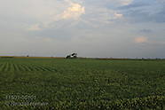 01: FARMS SOYBEAN FIELDS