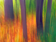 ICM Intentional Camera Movement with iPhone. Trees at edge of forest. St. Vital Park