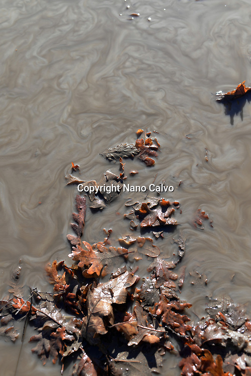 Fallen leaves and muddy water