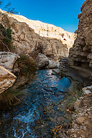 En Gedi Nature Reserve near the Dead Sea, Israel.