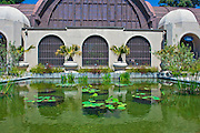 Botanical Building, Lily Pond, Reflecting Pool, Water Lilies, Balboa Park, San Diego, Ca , pictures of front door entrances