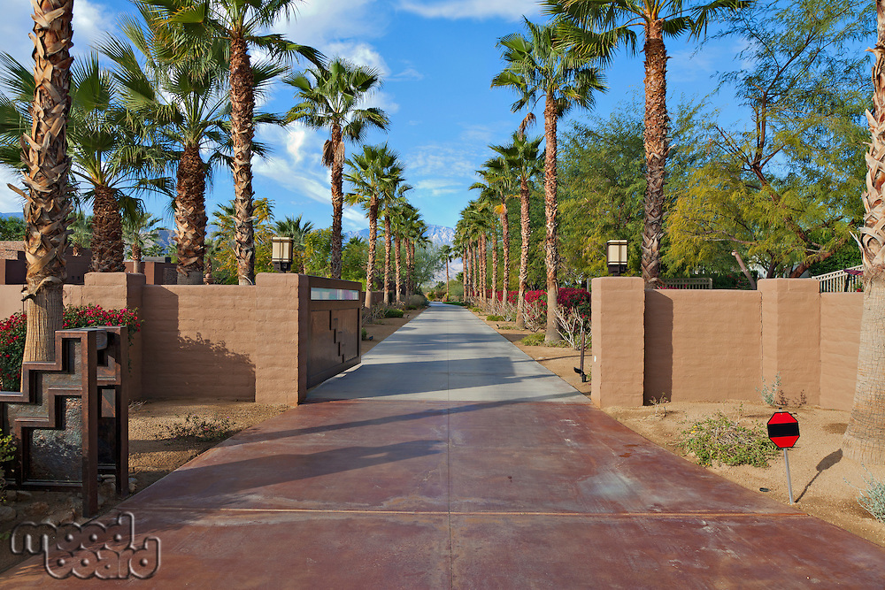 Empty Private Road lined with Palm trees .