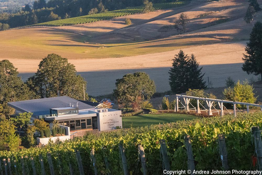 Pinot noir harvest, Saffron Field Vineyard, Yamhill-Carlton AVA, Willamette Valley, Oregon