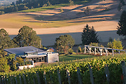 Pinot noir harvest, Saffron Field Vineyard, Yamhill-Carlton AVA, Willamette Valley, Oregon