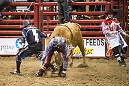 Lane Berg rides in the Xtreme Bull Riding at the Bismarck Rodeo on Thursday, Feb. 1, 2018.