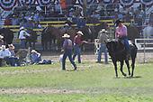 Steer Wrestling 2nd Section