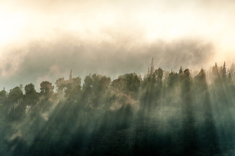 Sun shines through mist and trees at sunrise in Silverthorne, CO.