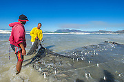 Trek-netters pulling in the net, Strandfontein, False Bay, Western Cape, South Africa