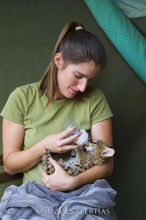 Serval<br /> Felis serval<br /> Suzi Eszterhas (Photographer/foster mom) bottle feeding five week old orphanserval kitten<br /> Tanzania