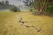 Sphagnum moss in dried vernal pool; NJ, Pine Barrens